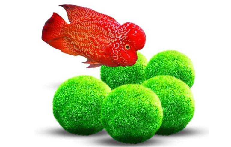 FAQs Betta Fish Toys