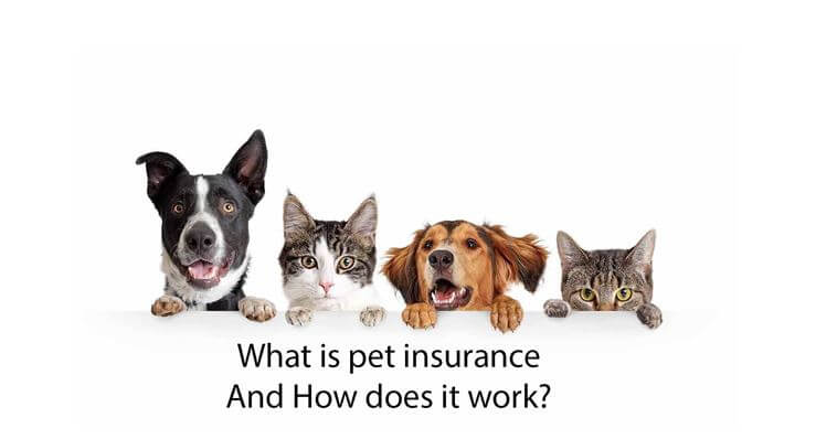 What is pet insurance and how does it work
