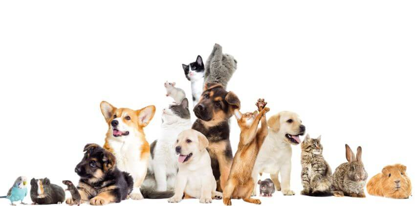 What is pet insurance and How does it work? (Complete Guide)