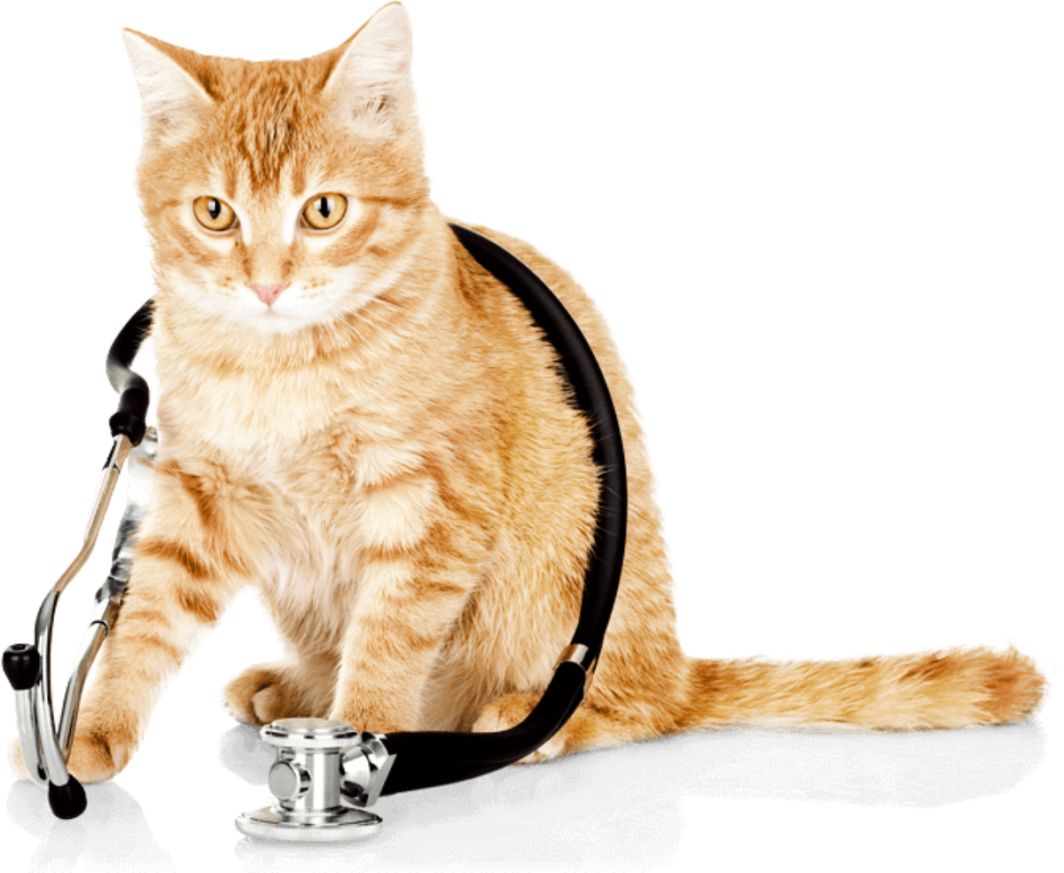 What Is Cat Insurance Facts Complete Guide
