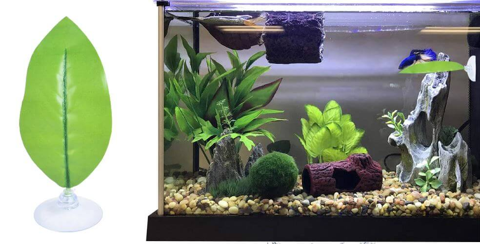 choosing live betta fish plants